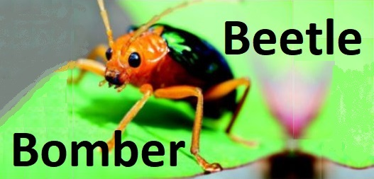 Beetle Bomber title picture